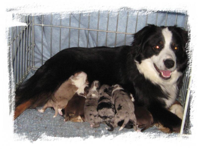 Amanda x Doc puppies born 02/12/15